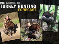 spring turkey hunting, where to hunt turkeys, where to go turkey hunting