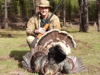 Gobbler, Turkey, Turkey Hunting, Hunting Turkey, Montana Turkey Hunting