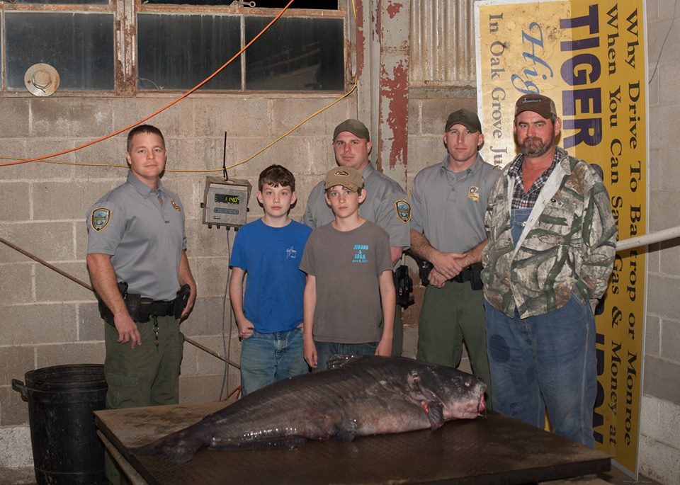La state record for blue catfish 114 game fish for Louisiana fish and game