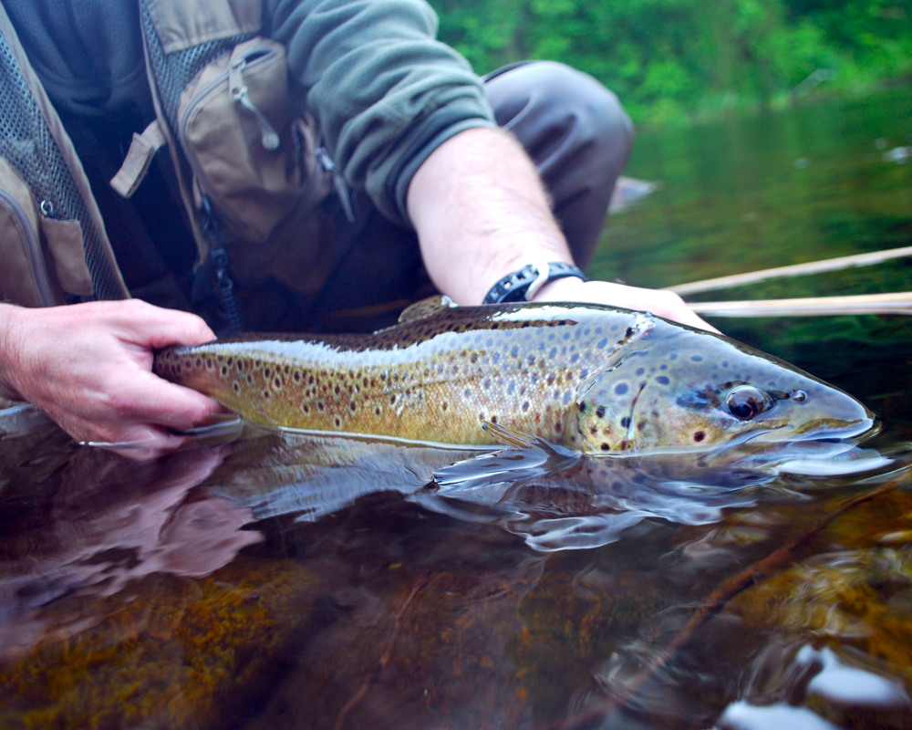 10 Outstanding Trout Fishing Trips in America