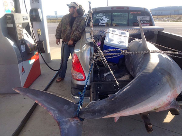 Florida Angler Catches 805-Pound Potential World Record Mako