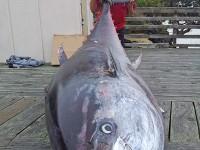 pascoe-tuna