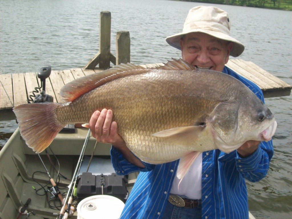 Image gallery oklahoma drum fish for Oklahoma fish and game