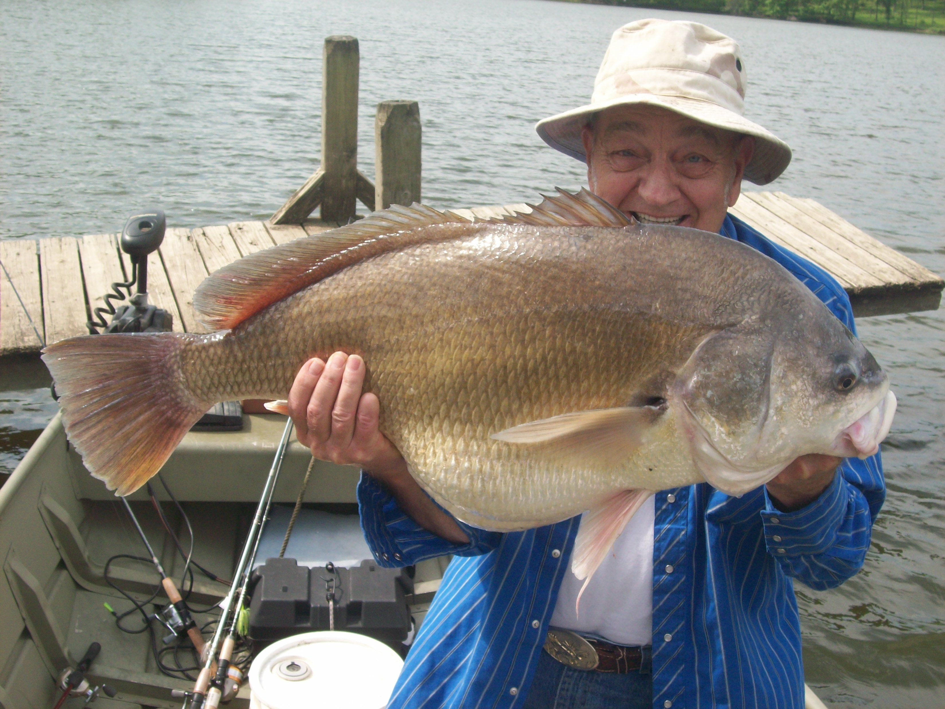 Huge freshwater drum game fish for Kansas fish records