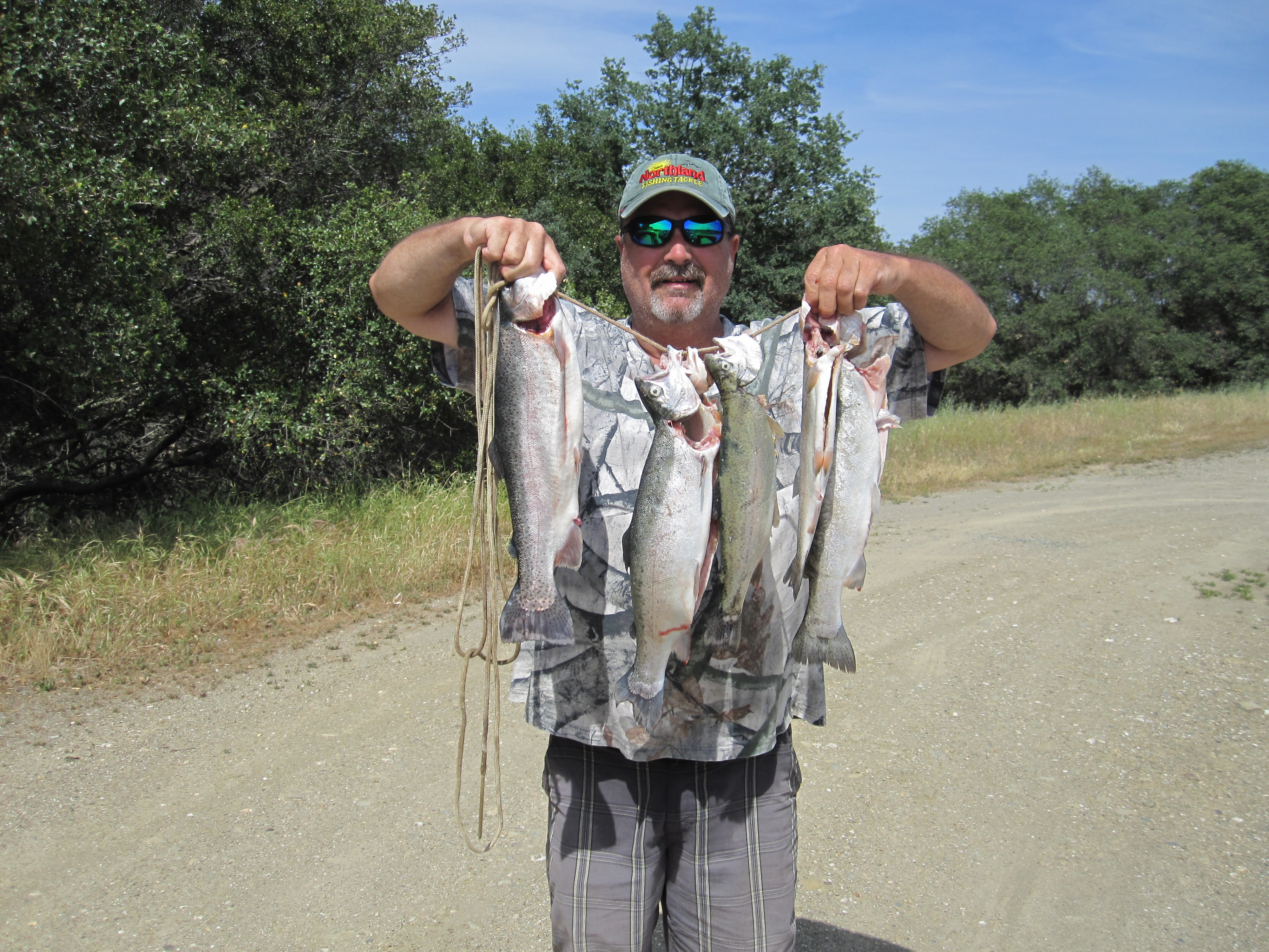 One heck of a limit of trout game fish for Lake amador fishing