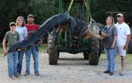 Woman's Massive Alabama Gator Could Be New World Record