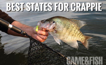 When it comes to American angling, crappie are unique fish. The world is home to only two