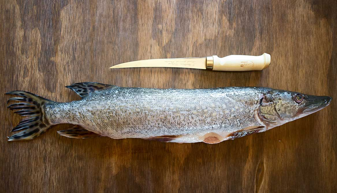 How to Filet a Pike