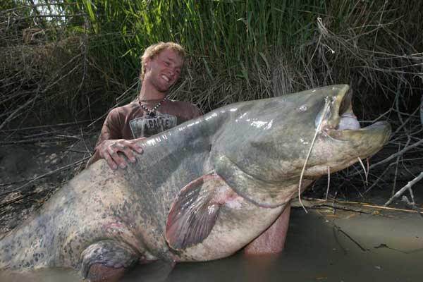 10 biggest catfish world records of all time game fish for Kansas fish records