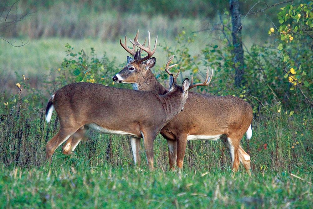 Oregon elk forecast 2016 download pdf for Va game and fish