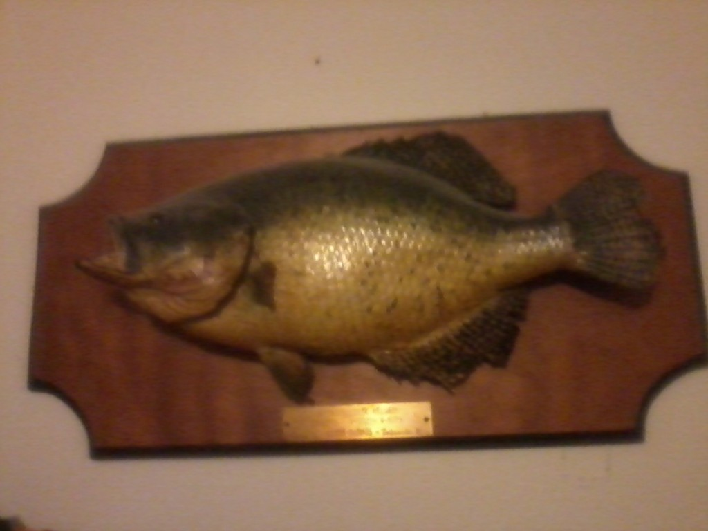 Illinois state record 4lb 7oz white crappie caught 4 8 for Illinois game and fish