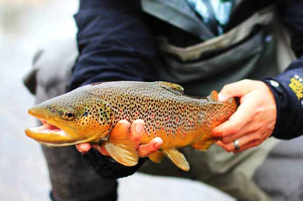 Top-20-Fall-Fishing-States-Feature