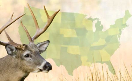 Big-Buck-States-2014