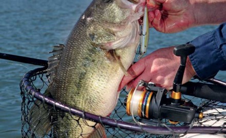 Cooling days and nights prompt active bass to feed, feed, feed as baitfish concentrate and the