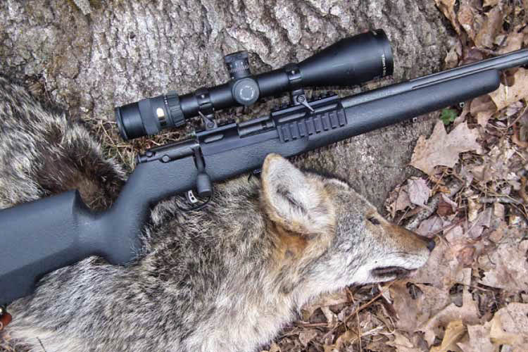 Coyote-Strategy_Main