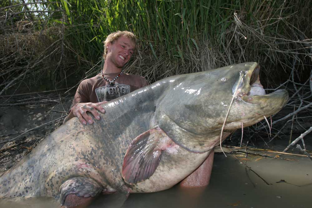 10 biggest catfish world records of all time game fish for Pa fish records