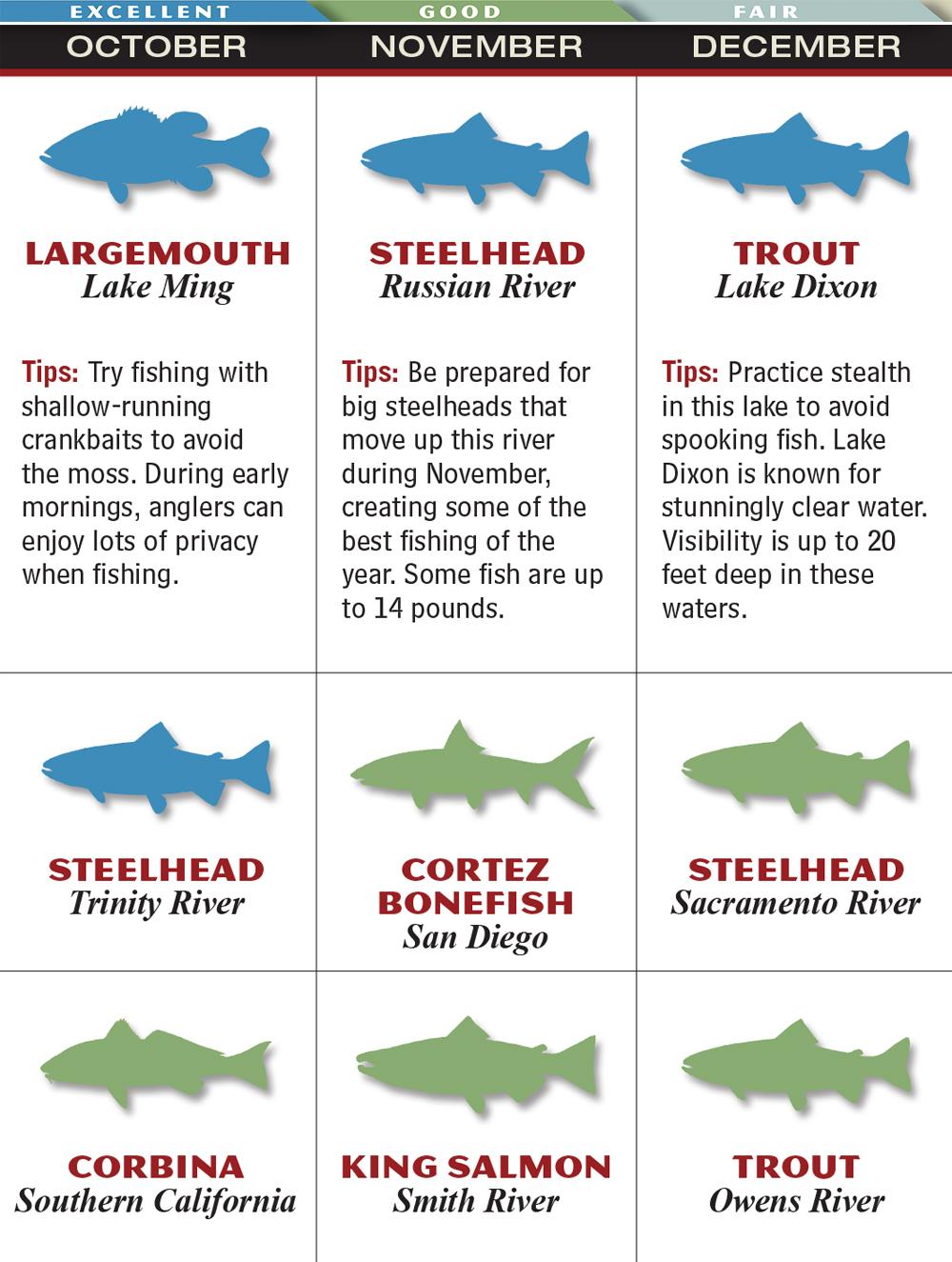 Freshwater fish of georgia - November Ca Oct Dec Russian River Steelheads