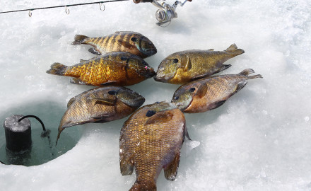Safe ice in February makes bluegill fishing a prime source of fun and tasty filets on a number of