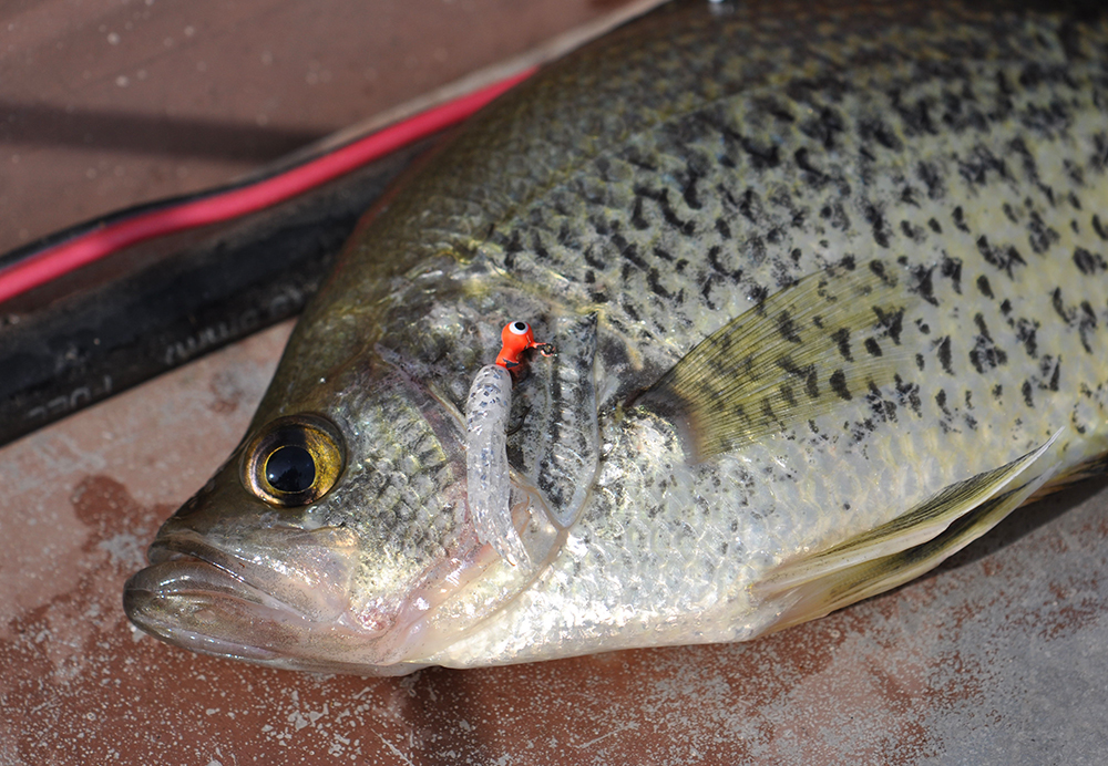 crappie with jig