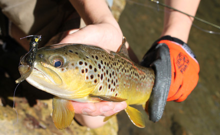 Stocked and wild trout together offer excellent options on the Chattooga River during May.  If you