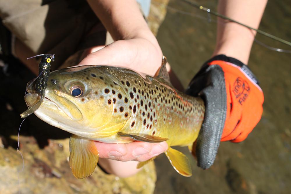 South Carolina 2015 Fishing Calendar