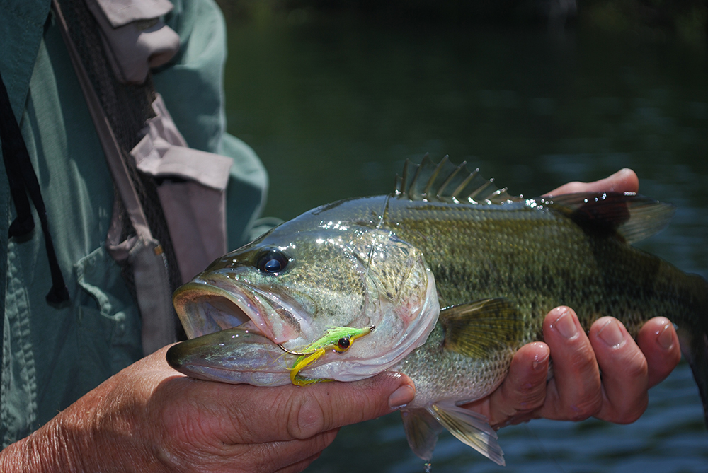 Illinois 2015 Fishing Calendar