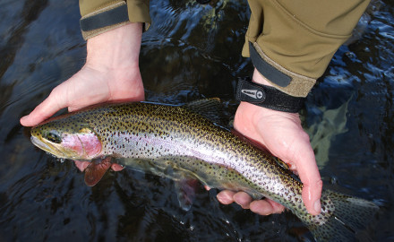 Many anglers know the key to catching coldwater trout is fishing slow and deep.