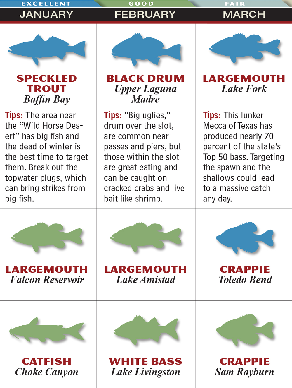 Saltwater fish size chart texas florida saltwater for Texas freshwater fish limits