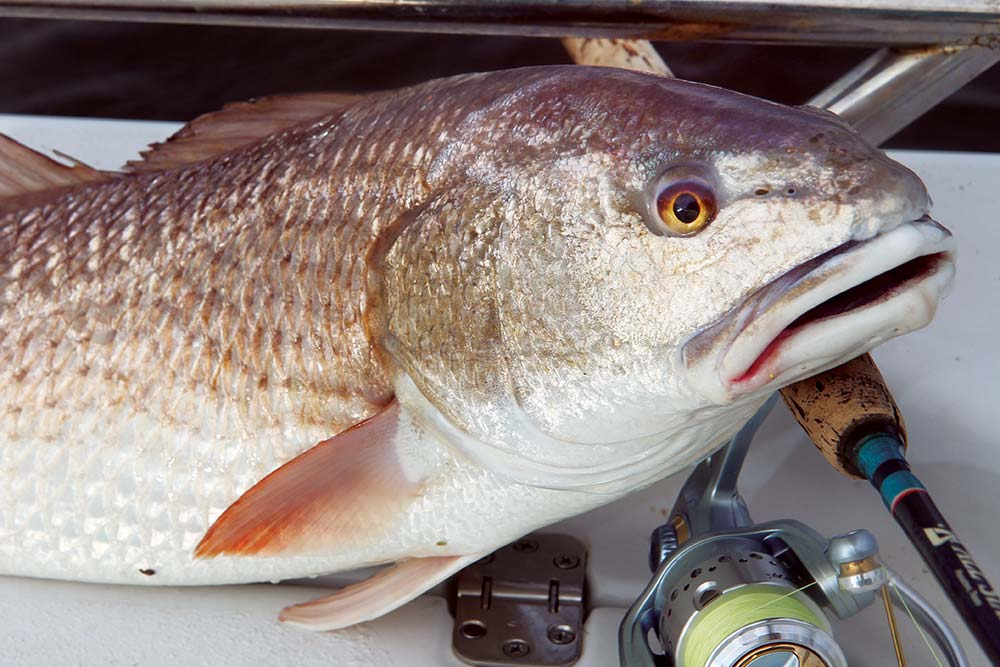Louisiana 2015 fishing calendar game fish for Fishing in louisiana