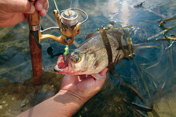 Best Crappie States for 2015