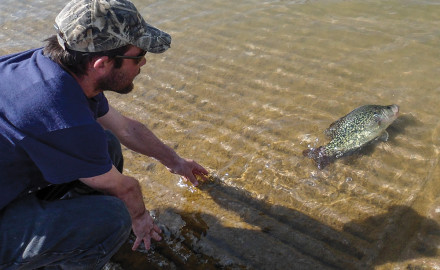 Pottsboro angler Johnny Summers released his Texas record black crappie back into the waters of Lake Texoma. The 2.93-pound slab set a lake record and a Texas catch-and-release record for black crappie.It hit a sliver and blue Rat-L-Trap in March of 2014.