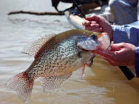 Anglers in Kansas and Nebraska can look to these locations for solid crappie action.