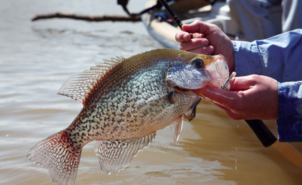 Anglers in Kansas and Nebraska can look to these locations for solid crappie action.  Great Plains