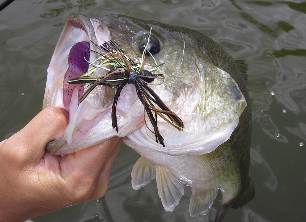 Virginia Bass Forecast for 2015