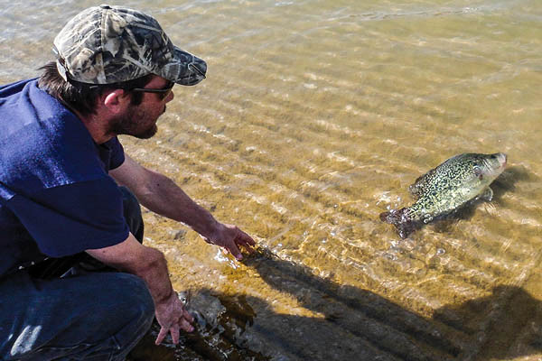 Best crappie states for 2015 game fish for Crappie fishing texas