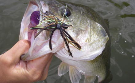 Bass are among the most studied gamefish species by the biologists with the Ohio Division of