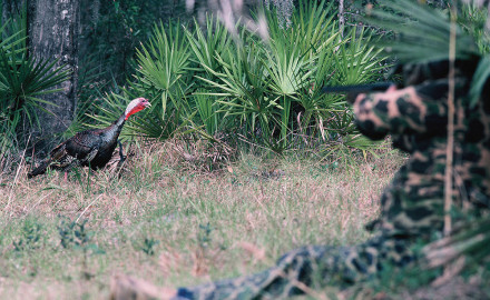 Florida has one of the earliest turkey seasons available and is a required destination for a Grand