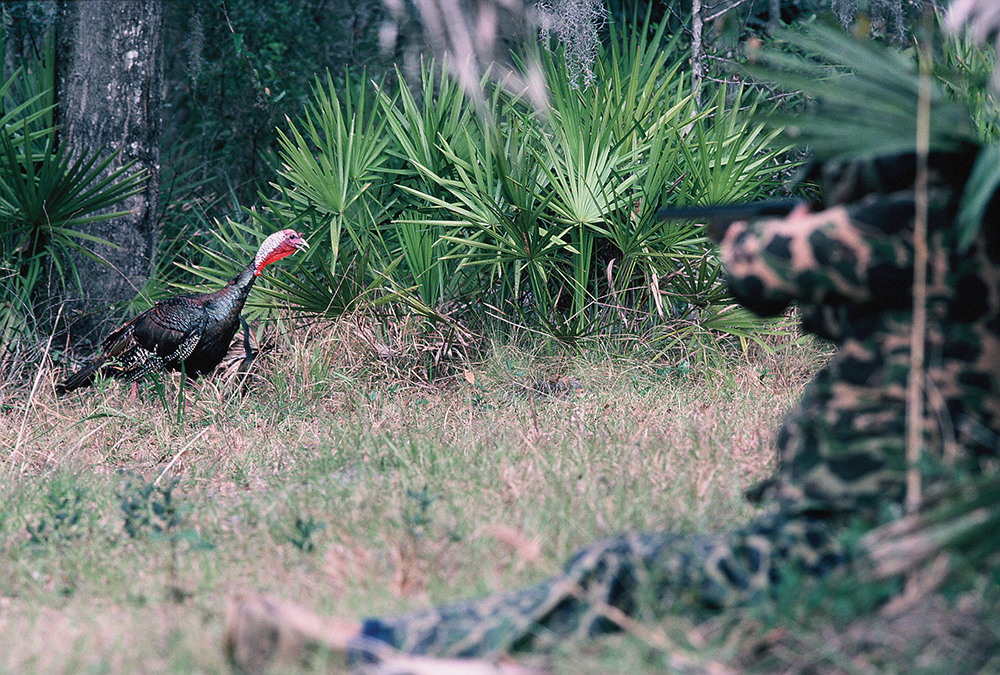 Florida Turkey Forecast for 2015