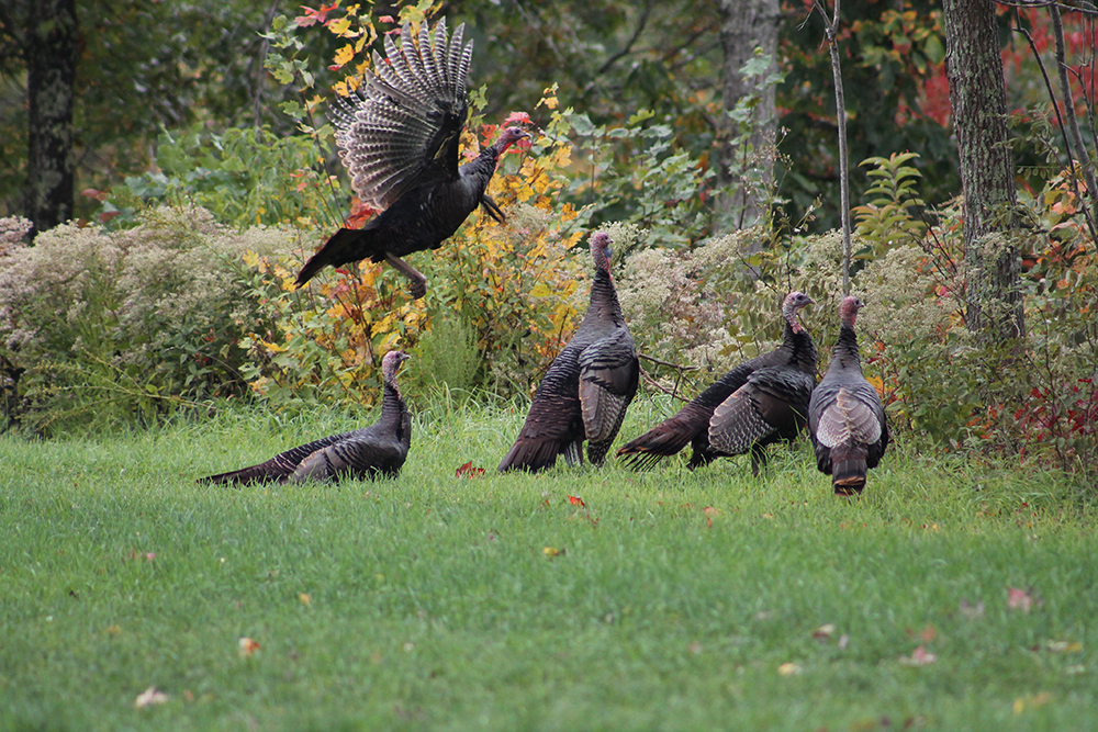 West Virginia Turkey Forecast for 2015