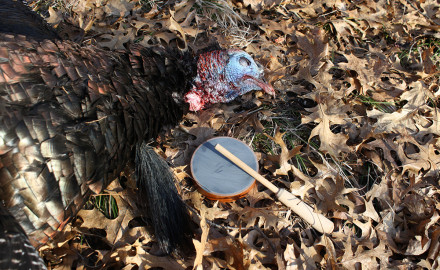 What can North Star State gobbler chasers expect when they hit the woods and fields this spring?
