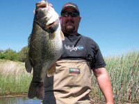 Alabama offers world-class fishing for smallmouths, largemouths and spotted bass. Find out where to catch your trophy bass in Alabama this spring.