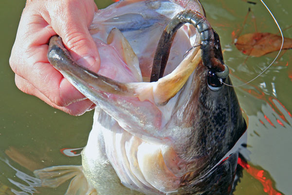 Kansas and Nebraska bass are biting, and here are our top spots for your next fishing trip.