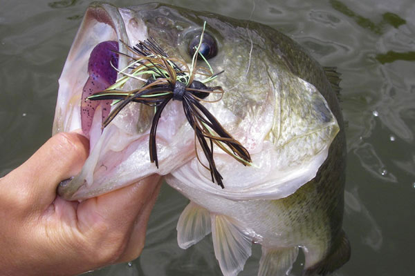 Here's a look at many of the top bass fisheries in Virginia and where they are.