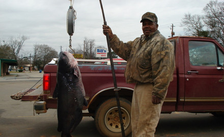 Here are locations and tips for landing Hoosier State cats.  The rampant excitement of spring