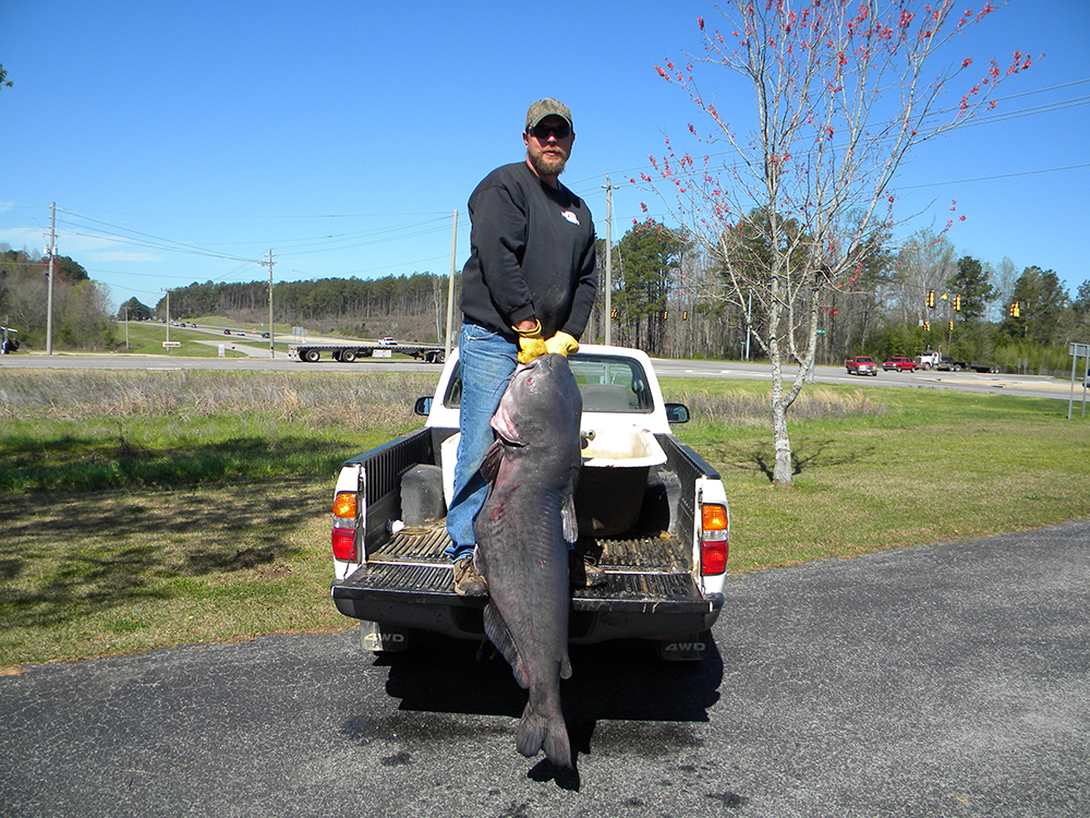 Kentucky catfish forecast for 2015 game fish for Kentucky fish and game