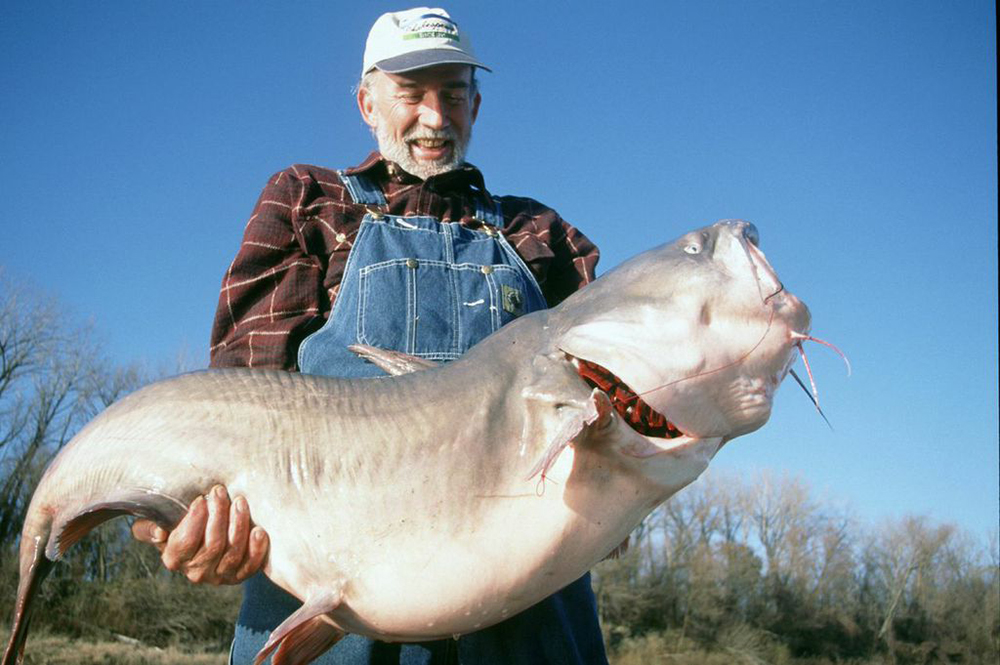 Illinois catfish forecast for 2015 game fish for Illinois game and fish