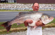 Missouri Angler Lands 65-Pound Striped Bass