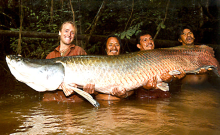 10 biggest muskie world records ever caught game fish for Pa fish records