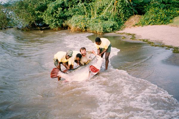 Nile-Perch