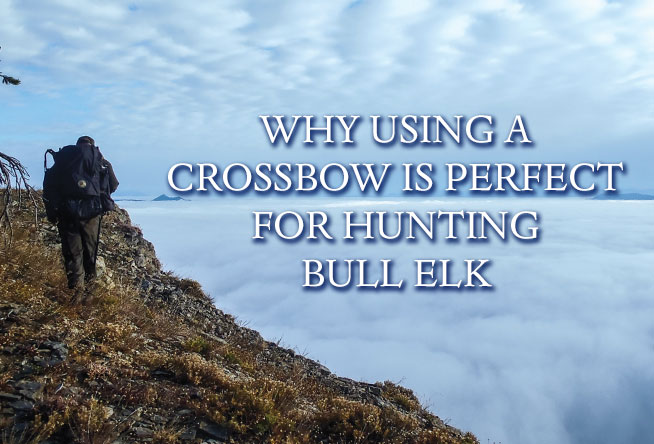 Why Using a Crossbow is Perfect for Hunting Bull Elk